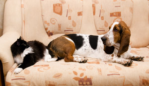 Sofa in Pasa Robles home With Animals On It