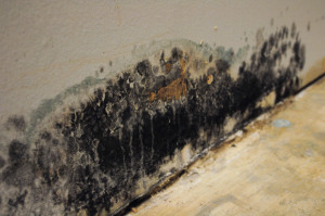 Wall-in-Chicago-that-has-mold-damage-300x199